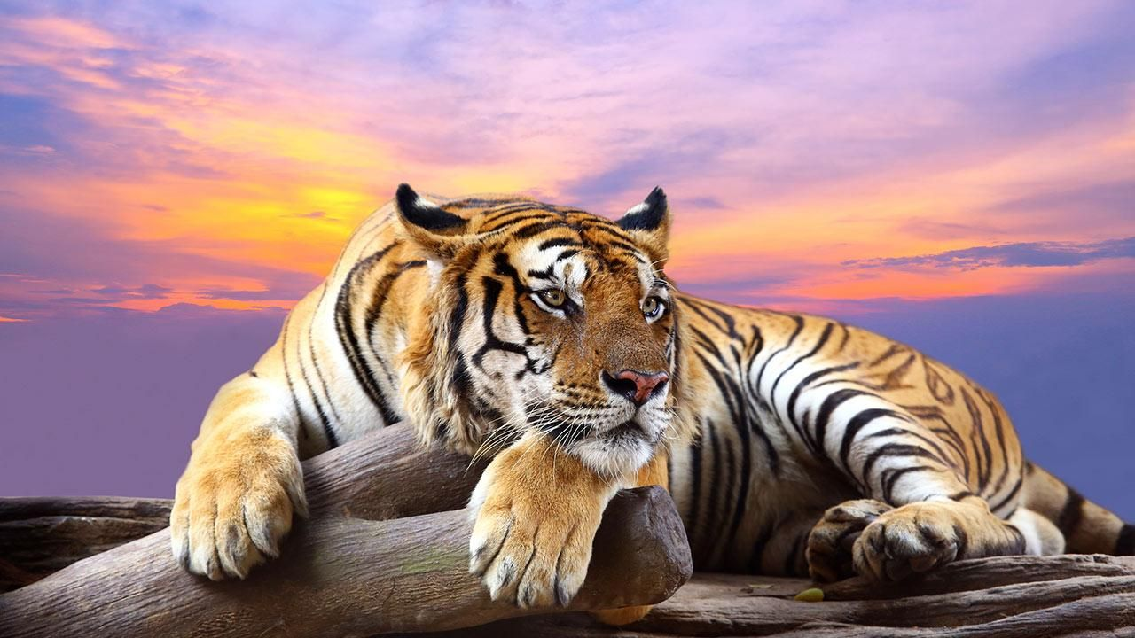Wild Animals Live Wallpaper - Android Apps On Google Play ...