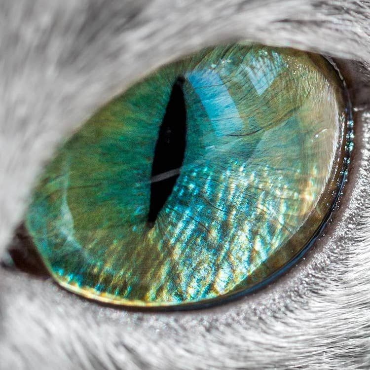 Pin Auf Augen Eyes
