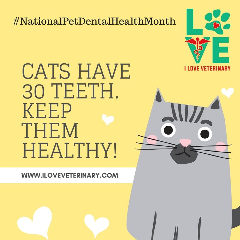 Don't that cats need dental care too! Pet dental