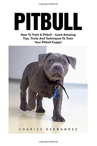 Pitbull How To Train A Pitbull Learn Amazing Tips Tricks And