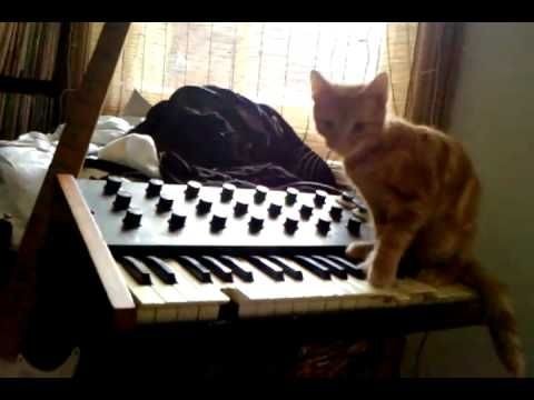 Cool performance of a cat