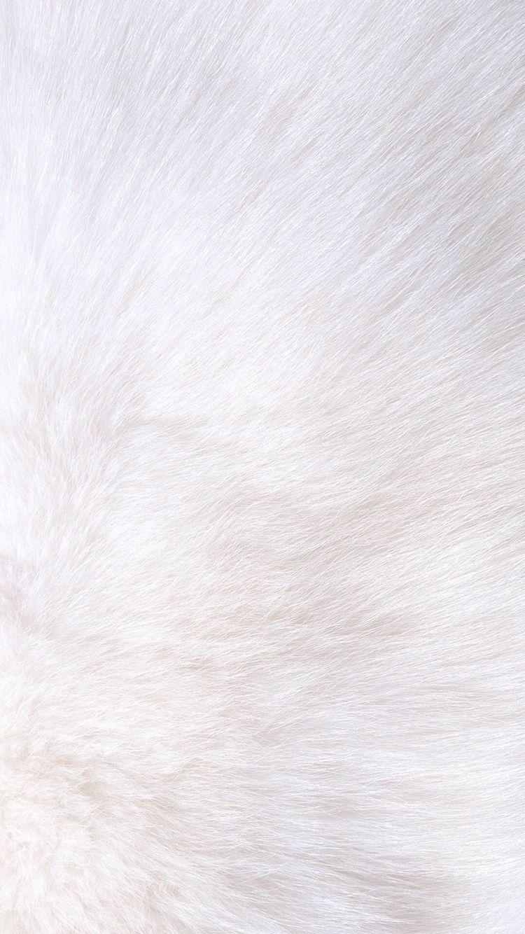 White Fur Iphone Wallpaper Carta Da