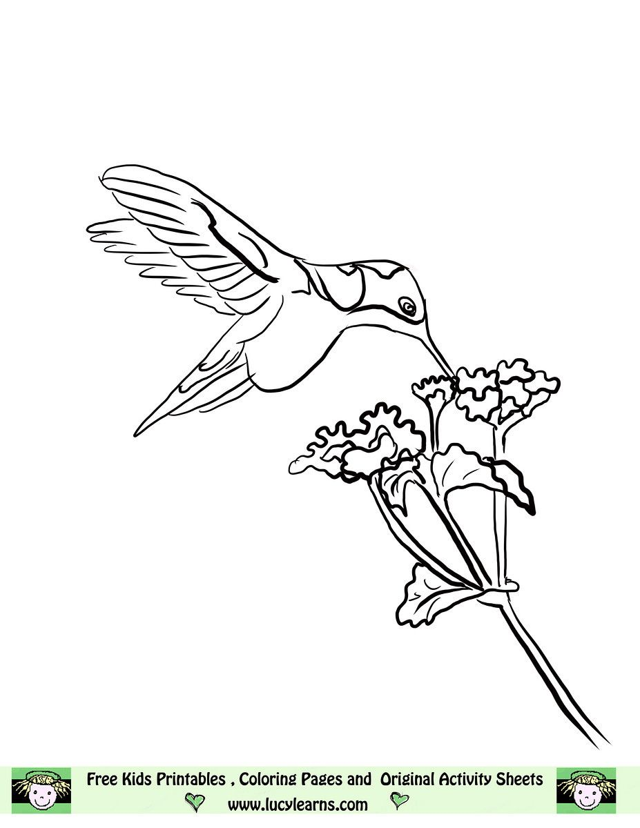 Image detail for -Free Hummingbird Coloring Page, Lucy Learns ...