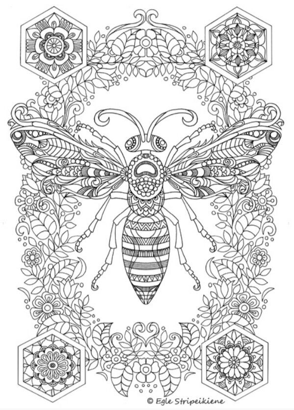 Amazing Detailed Bee Complex Adult Coloring Page Free