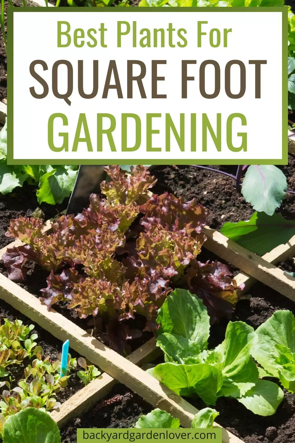 66a5aa06935ac6f2e60145a3e92d1a6c - Garden Time's Square Foot Gardening Potting Soil