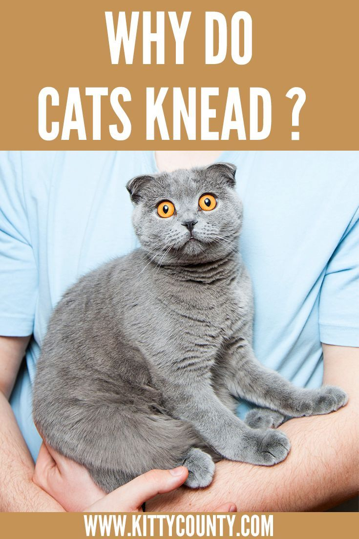 Why Do Cats Knead ? in 2020 Cats knead, Cat behavior