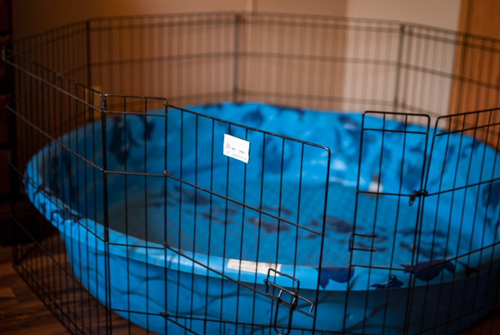 Whelping Area Whelping Box Plastic Paddling Pool Puppy Room