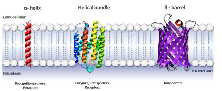 Tj Schematic Diagram Of Typical Membrane Proteins In A Biological