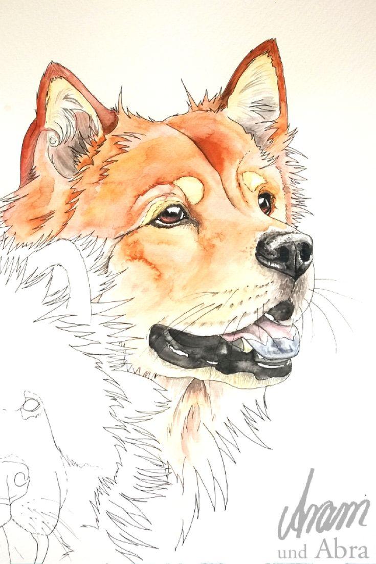 Tierportrait Aquarell Von Hunden Eurasier Von Aram Und Abra