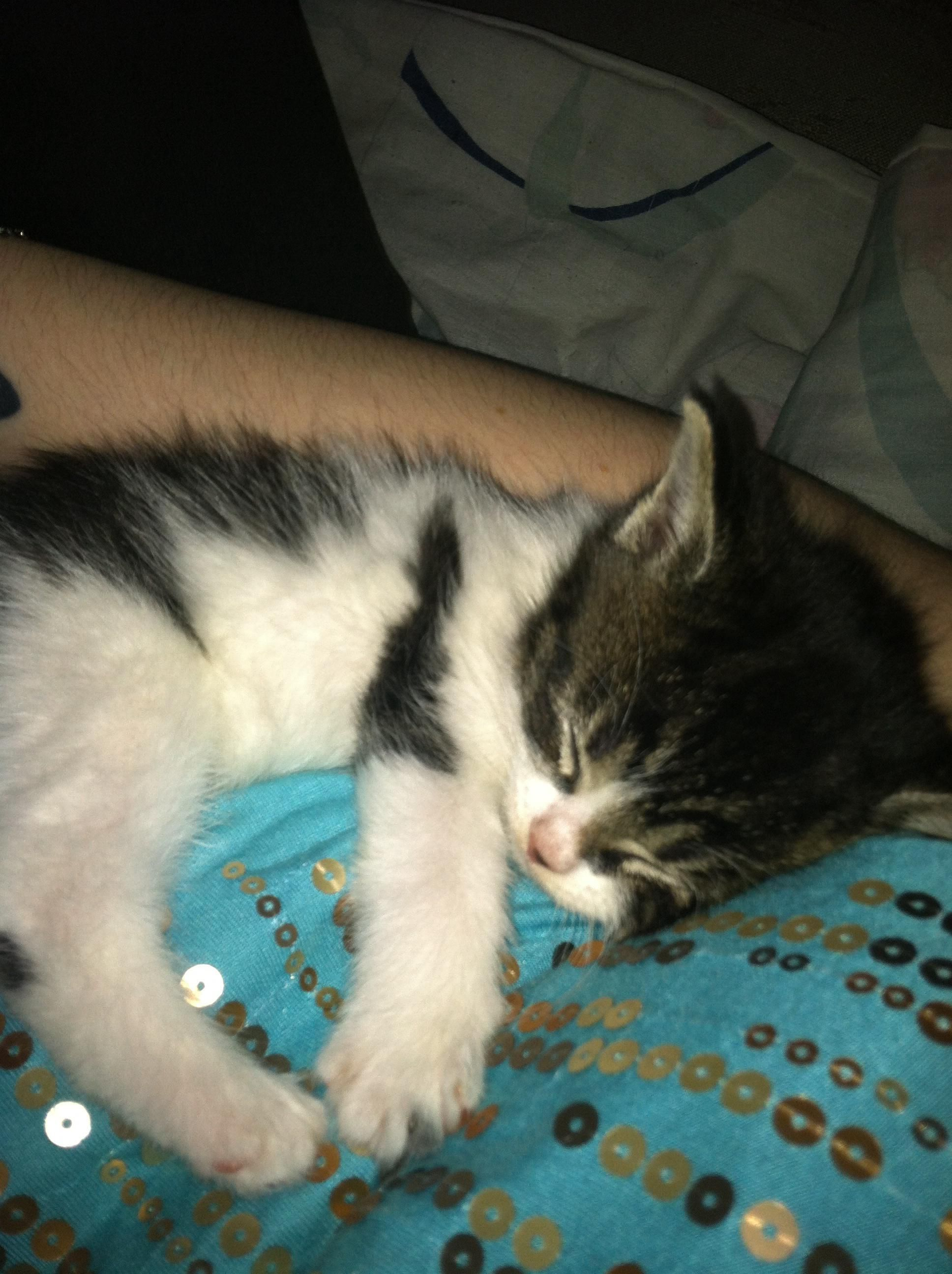 Name Ops Kitten Cat Obsession Kittens Cutest Cool Cats