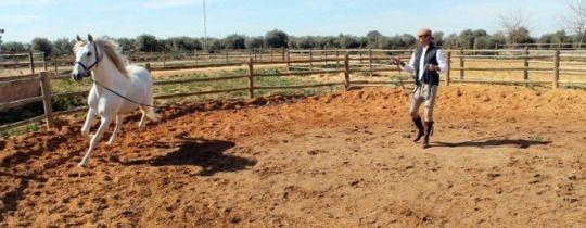 Sergio Ramos | insp :: horses & people | Horses, Animals, Goats