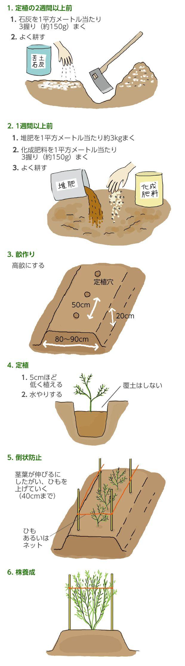 アスパラガスの育て方 栽培方法 失敗しない栽培レッスン 野菜の育て