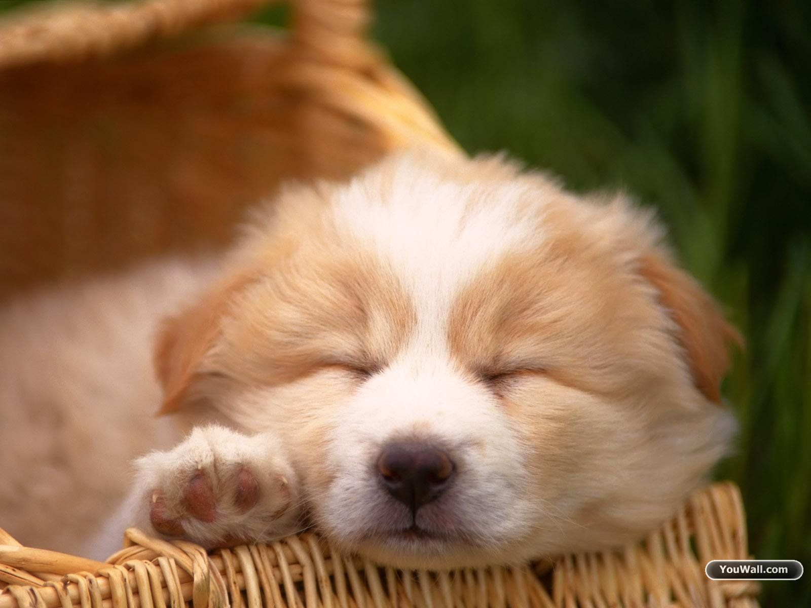 Group Of Cute Puppy Dogs Wallpapers