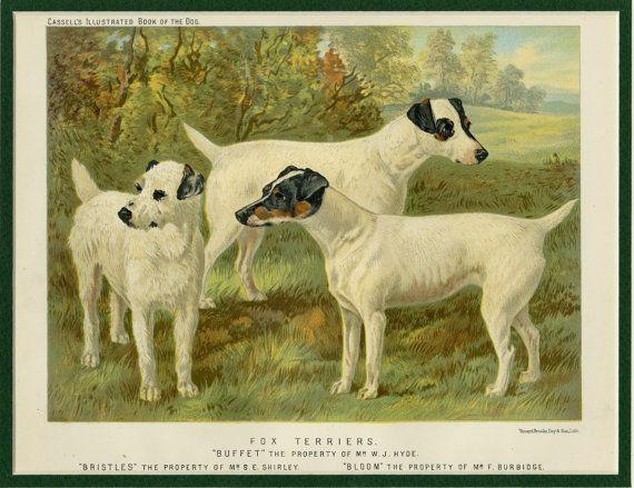 Fox Terrier Art Print - Terrier Wall Art, Terrier Gift, Terrier ...