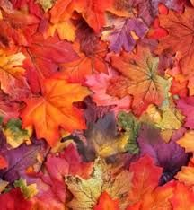 bag of autumn leaves - Google Search