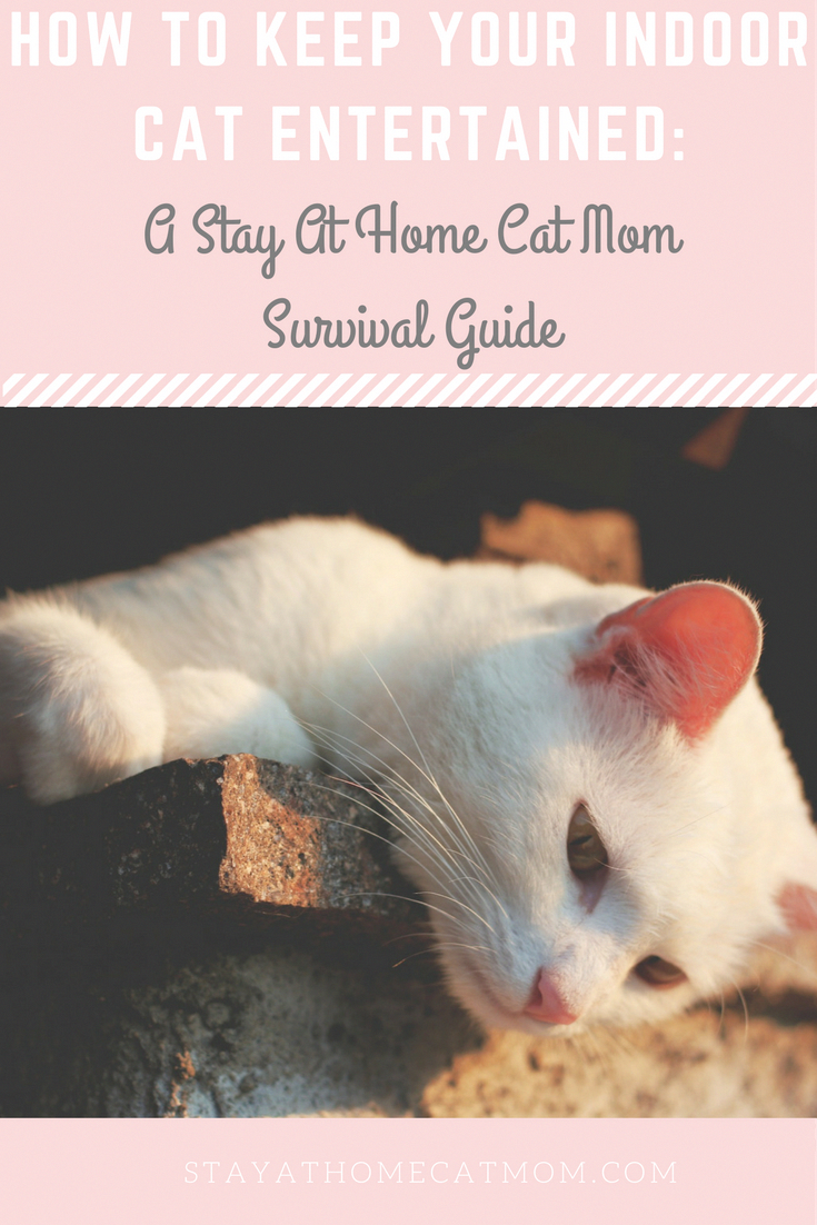 How To Keep Your Indoor Cat Entertained A Stay At Home Cat Mom Survival Guide Cat Mom Indoor Cat Cat Care