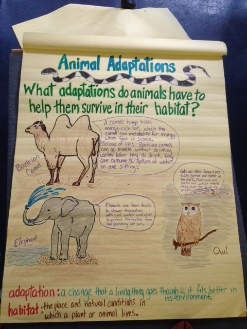3rd grade science animal adaptations 3rd grade pinterest anchor charts charts and anchors. Black Bedroom Furniture Sets. Home Design Ideas