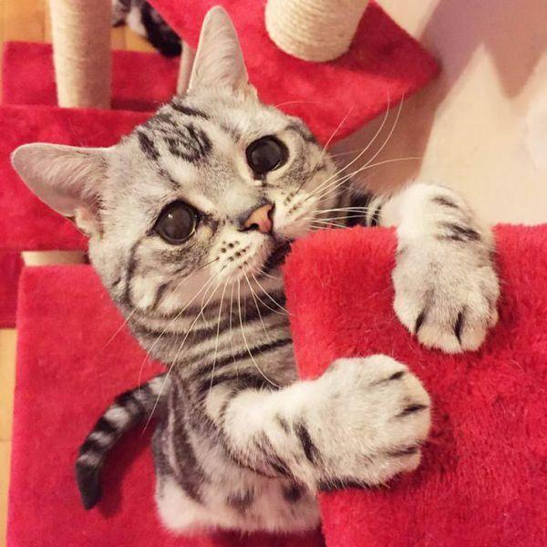 Pin von fische auf Little Cats!   Katzen, Lustige