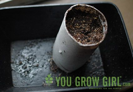 Start seeds in toilet paper rolls - easy to transfer and they decompose into the soil!