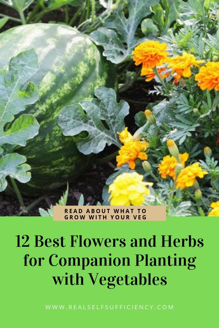 Companion Planting With Zucchini: 12 Best Herbs And Flowers For Companion Planting With