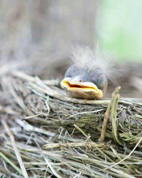 Baby Bird Hair : Birds,, Beautiful, Animals