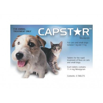 Capstar Cats Small Dogs Capstar Pinterest Fleas Dogs And