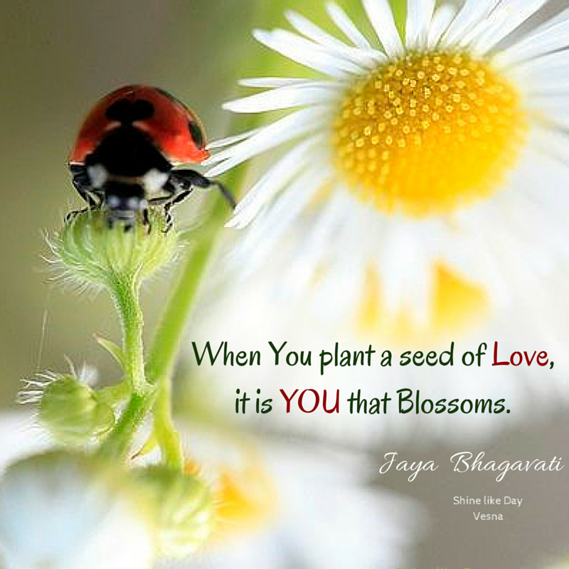 When You Plant A Seed Of Love It Is You That Blossoms Love Plant Awesome Planting Seeds Inspirational Quotes