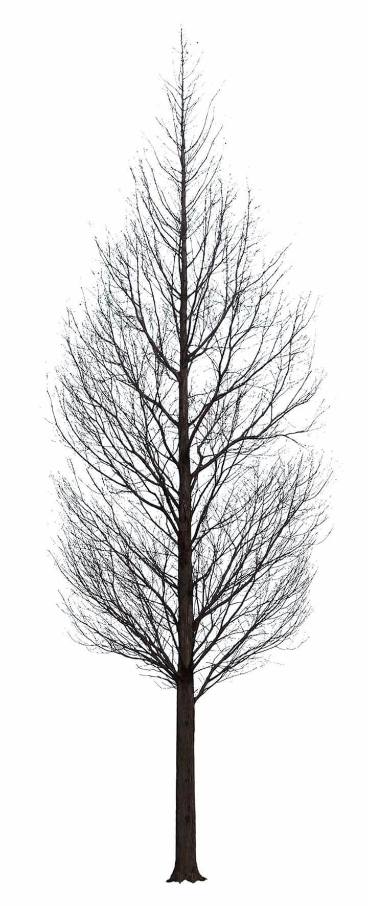 Winter Tree Tree Photoshop Photoshop Landscape Dark Tree