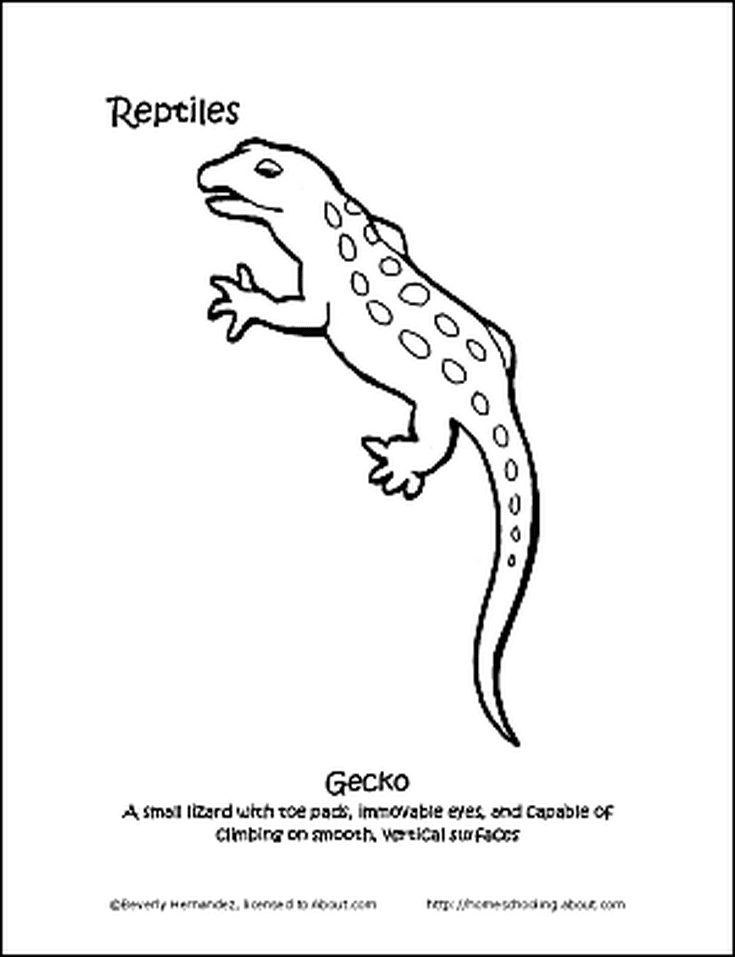 Learn About Reptiles With A Free Printable Coloring Book Printable Coloring Book Coloring Books Free Printable Coloring