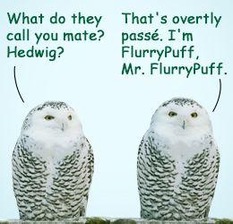 Cute Pet Owl Names Cute Animals Pet Names Pets