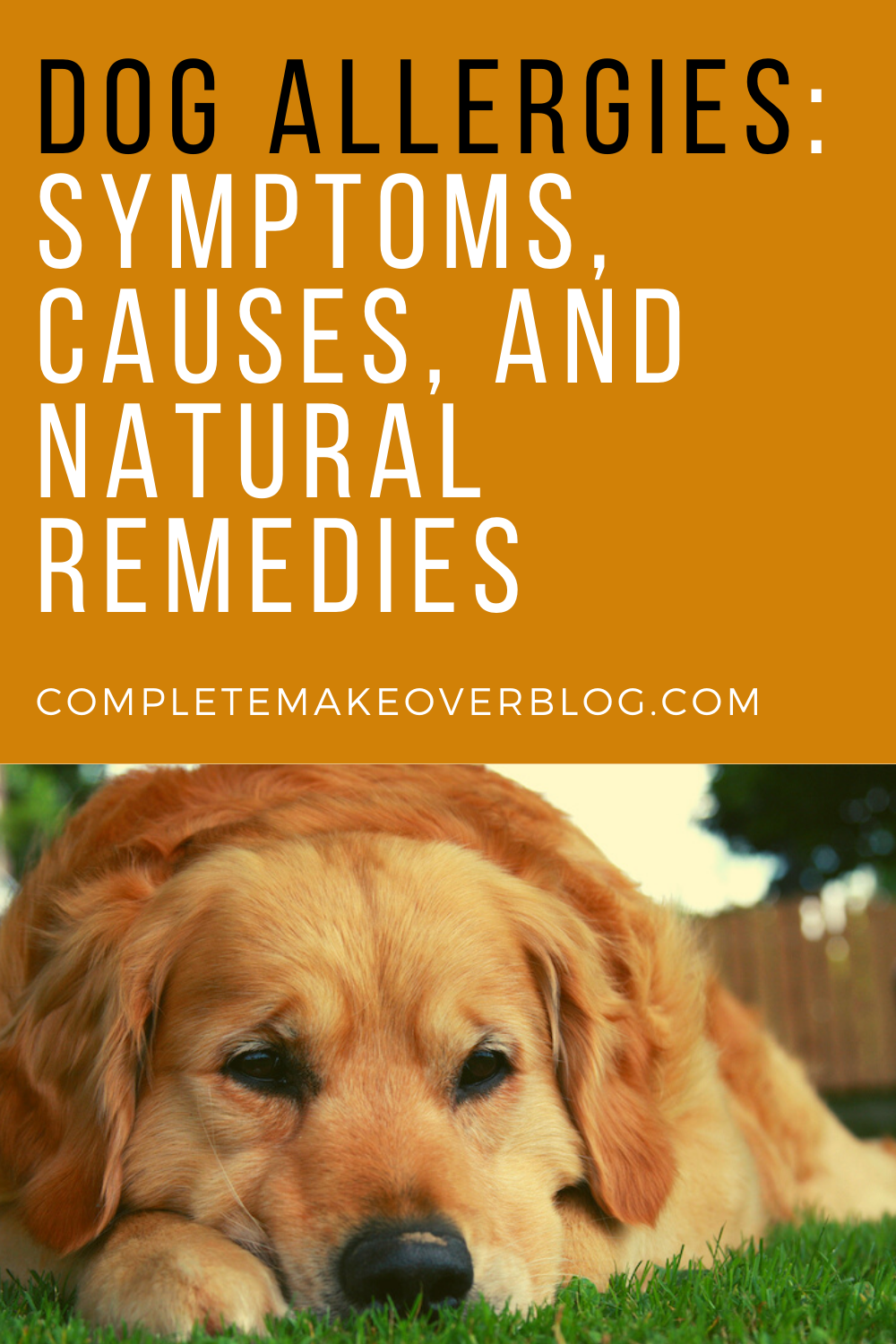 Dog Allergies Symptoms Causes And Natural Remedies In 2020 Dog Allergies Dog Skin Allergies Allergies