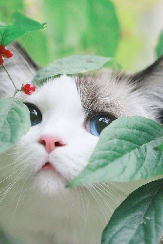 Is Your Cat Insecure? 6 Surprising Signs Of Insecu
