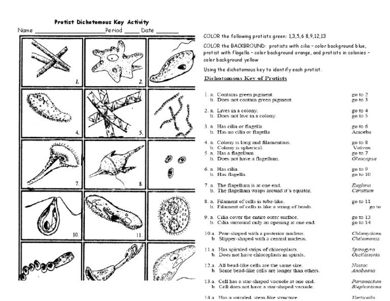 Dichotomous Worksheet Sharebrowse – Dichotomous Key Worksheet