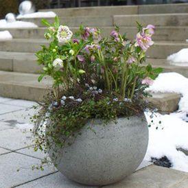 Zauberhafte Christrose: Winter-Bepflanzungen für Balkon und Terrasse #weihnachtsdekobalkon