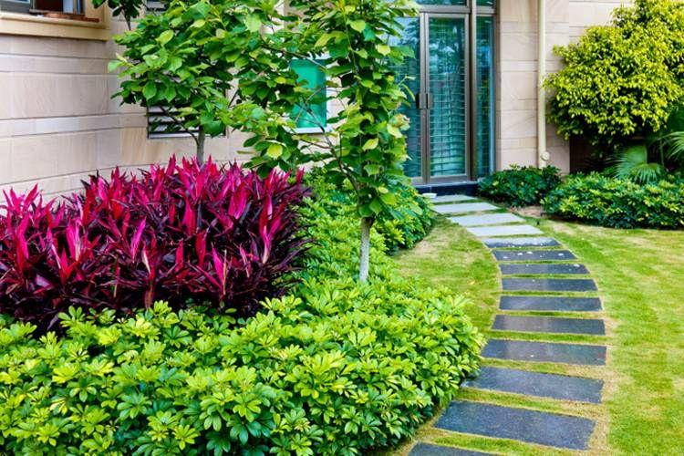 Idées d\'aménagement jardin sans entretien -conseils utiles | Plante ...