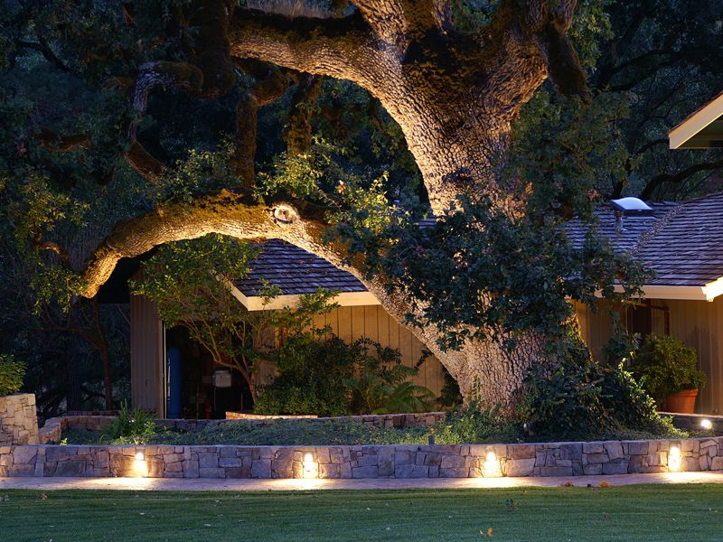 Lighting Is A Great Feature For Walls, Fences, And Landscape Specimen, Such  As