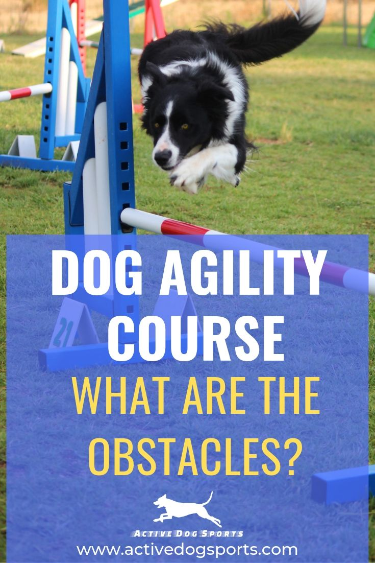 Exploring Dog Agility Learn About The Dog Agility Course And The