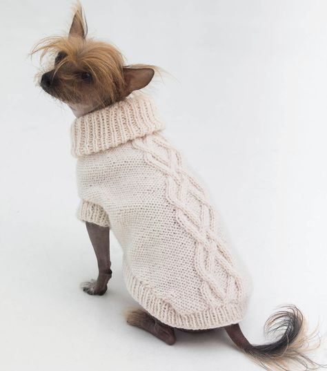 The Prep Dog Sweater // Dog Knits | Napoleon clothes | Pinterest