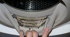 comment enlever les moisissures dangereuses et les odeurs desagreables de votre machine a laver. Black Bedroom Furniture Sets. Home Design Ideas