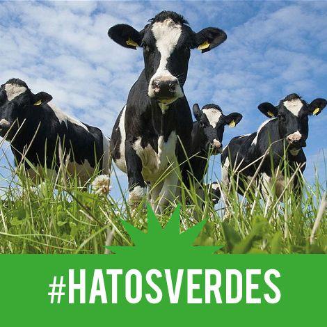 La producción sostenible y responsable de #HATOSVERDES de #Primma, da como resultado la leche que tú y el planeta necesitan.