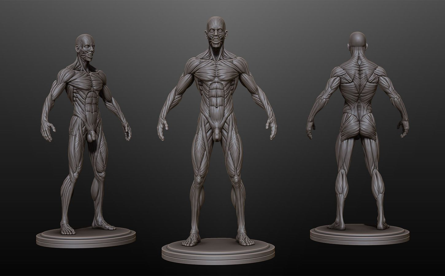 Download Male Ecorche Rest Pose free 3D model or browse