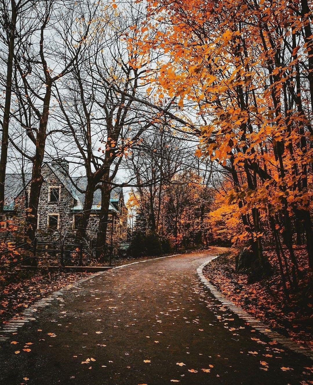 Autumn Cozy, Scenery, Autumn Photography