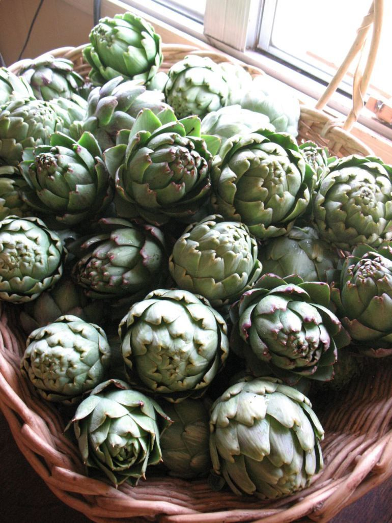how to grow artichokes in pots