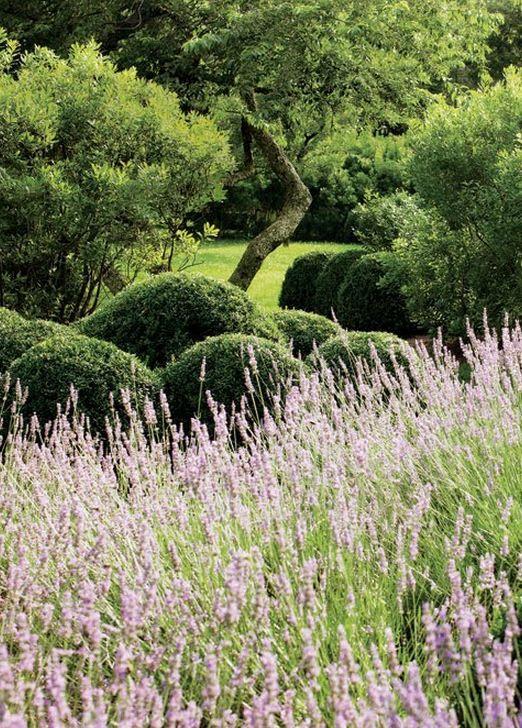 Lavender, boxwood, and bayberry; Miranda Brooks   Landscape - Design ...