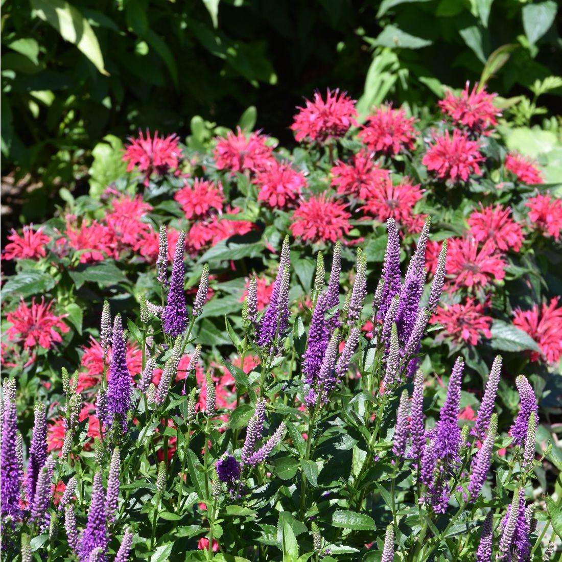 Spectacular Plant Combinations For The Perennial Garden Plant