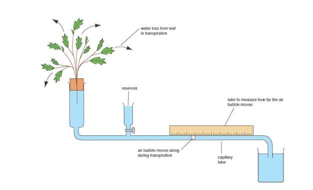 Measuring transpiration. | Aqa, Bar chart, Diagram