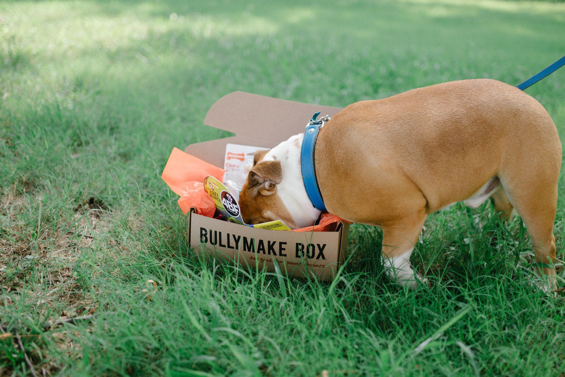 Tough Dog Toys Monthly Subscription Box Tough Dog Toys Dog Toys