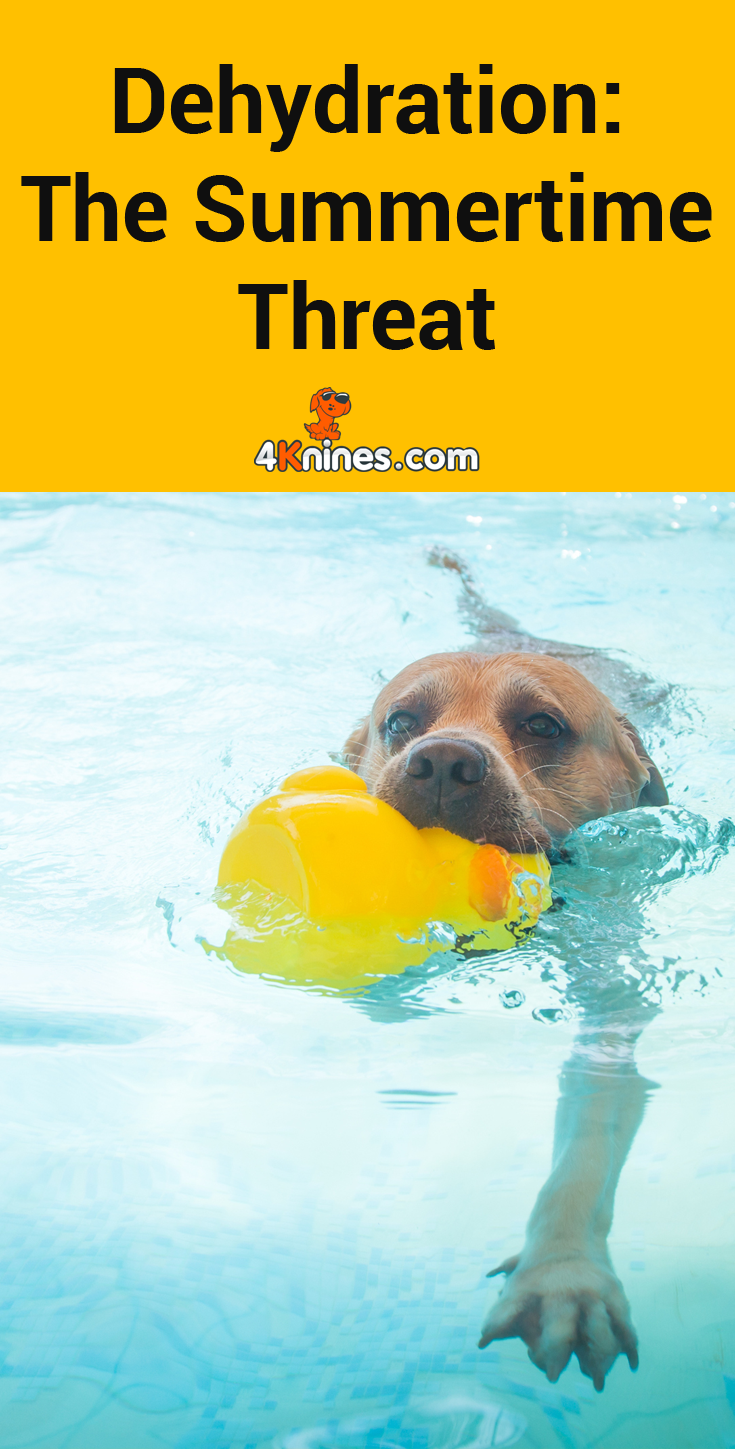 Water Is Something That Can Go Overlooked A Lot In Our Dogs Lives Because Who Is Monitoring Their Dogs Exact Water Intake Here S How Y Your Dog Dogs Pet Care