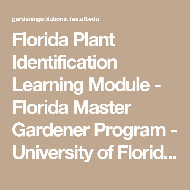 An Online Tool For Learning About Florida Plants, From The Florida Master  Gardener Program, A Program Of The University Of Floridau0027s Center For  Landscape ...
