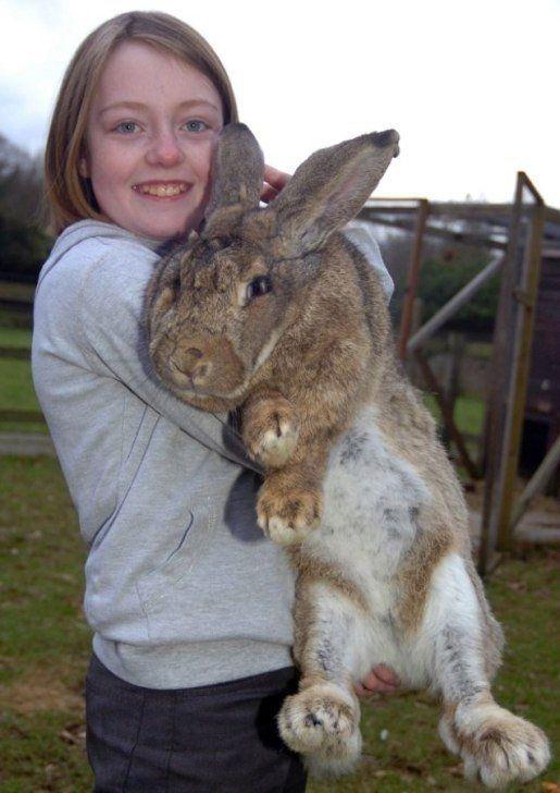 Ральф - самый большой кролик в мире - Путешествуем вместе